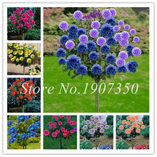 50 Pcs Bonsai Colorful Dahlia Flower Outdoor Tree Charming Flower(Not Bulbs)Home Garden Potted Plant