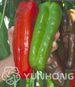 "100% True Giant 100 Pepper Seeds Giant Marconi Hybrid ""Giant Pepper , DIY Home Garden Vegetable Plant Free Shipping"