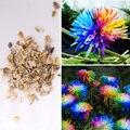 100Pcs Rare Rainbow Chrysanthemum Daisy Dorotheanthus Flowers Seeds Plant Garden