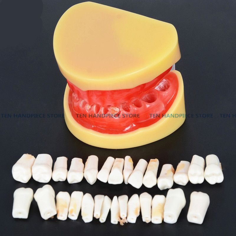 2018 good quality Dental All teeth Removable Standard Teeth Tooth Model 28 pcs teeth student learning model free shipping good quality dental soft gum teeth model with tougnetypodont w 32 removable teeth nissin 200 compatible