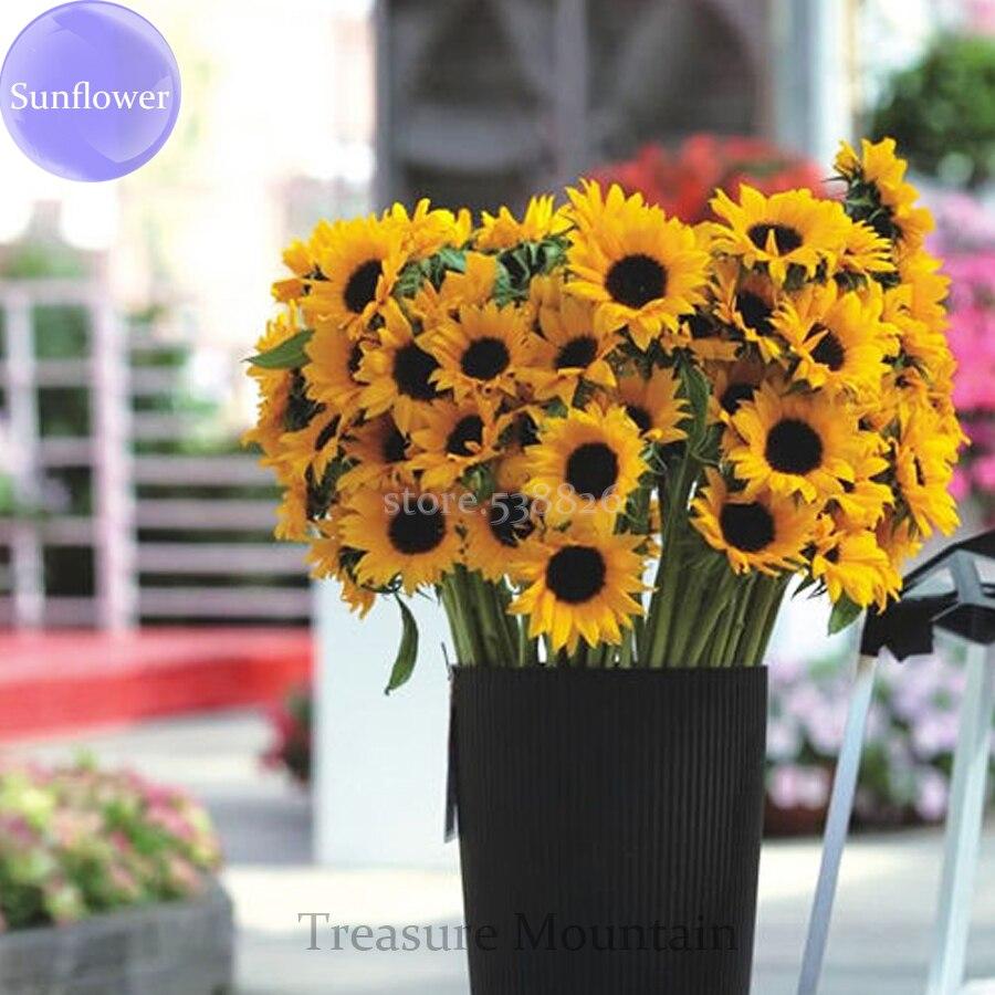 achetez en gros tournesols fleurs coupées en ligne à des