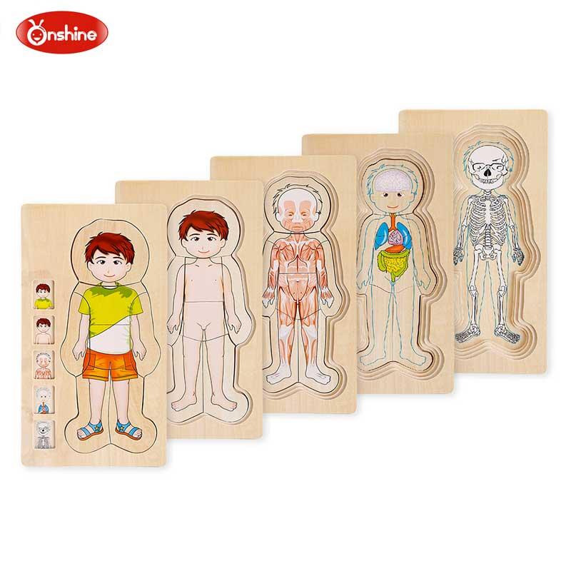 Onshine jouet en bois puzzle multicouche 3D composition corporelle jouet enfant garçon fille apprentissage précoce jouets éducatifs cognitifs