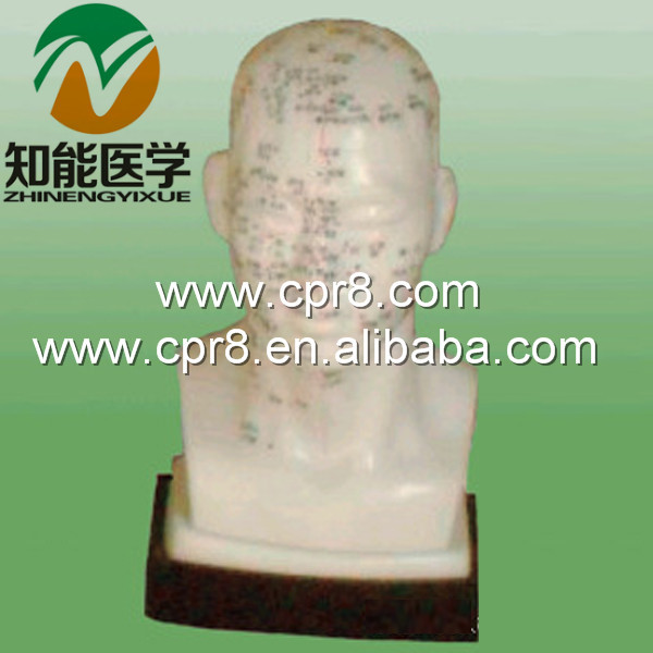 BIX-Y1020 Life-Size Head Acupuncture Model G166