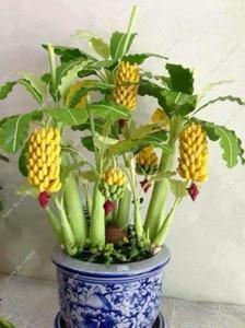 100 Pcs Dwarf Banana Bonsai, Mini Tropical Fruit Tree, Pink Banana Balcony Sementes Da Fruta For Home Planting, 95% Germination