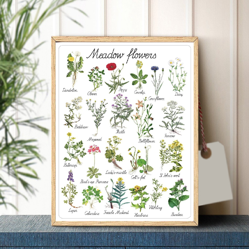 Montessori Flowers Art Canvas Painting Educational Poster Botanical Kindergarten Wall Art Picture Prints Kids Room Wall Decor