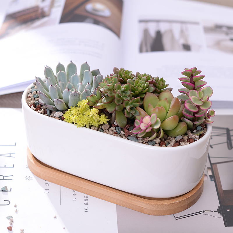 1 Set Minimalis White Ceramic Succulent Plant Pot Porcelain Planter Decorative Desktop Flower Pot Home Decor (1 Pot + 1 Tray)