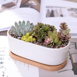 1 Set Minimalist White Ceramic Succulent Plant Pot Porcelain Planter Decorative Desktop Flower Pot Home Decor(1 Pot + 1 Tray)