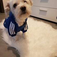 A01 брендовый дешевый свитер для собак adidogs, одежда для маленьких щенков, пальто для собак, толстовки, одежда для чихуахуа, йоркширского терьера