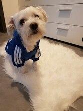A01 اسم العلامة التجارية رخيصة كلب adidog سترة الملابس الصغيرة جرو الكلاب معطف هوديس الملابس ل Chihuahua يوركشاير sweatershirt