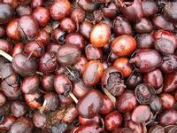 Eeuwige Jeugd 100 ml BIOLOGISCHE PURE Sheaboter Ongeraffineerde Verse Import Uit Afrika Groothandel