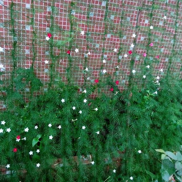Plant Climbing Net Animal Trap Garden Netting Climbing Plants