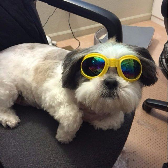 52079f9c8bb390 Hot Opvouwbare Hond Zonnebril Medium Grote Hond Bril Grote Huisdier Eyewear  Waterdichte Hond Bescherming Goggles UV