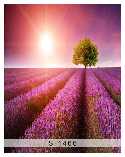 Fotografia Wonderful Lavender Field Photography Backdrops Sunset Scenic Wallpaper Backgrounds For Photo Studio Background S 1466 In From Consumer