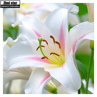 DIY diamond embroidery lily flower 5D diamond painting Cross Stitch full square drill Rhinestone mosaic home decoraton