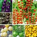 5 tipos de sementes de Tomate, 10 pieces para cada espécie. Total de 50 sementes, a germinação de 95% + fresco, frete grátis