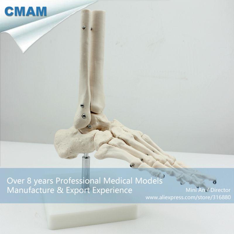 CMAM113, Life-Size Foot Joint, Individual Packs, anatomy models, - School en educatieve benodigdheden - Foto 2