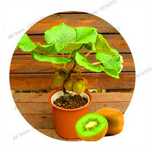 Promotion!100pcs rare kiwi seeds mini Kiwi fruit seeds Heirloom Kiwiberry Berry Vegetable and Fruit seeds For DIY Home garden NO