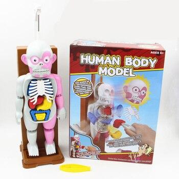 Divertido] novedad mordaza juguete Anatomía Humana truco broma ...