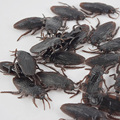 New model simulation cockroach Xiaoqiang Tricky Tricky Toys April Fool's Day Christmas Halloween New Year's small toys