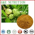 100% Pure Morinda citrifolia extract powder/Noni juice powder  4:1 800g