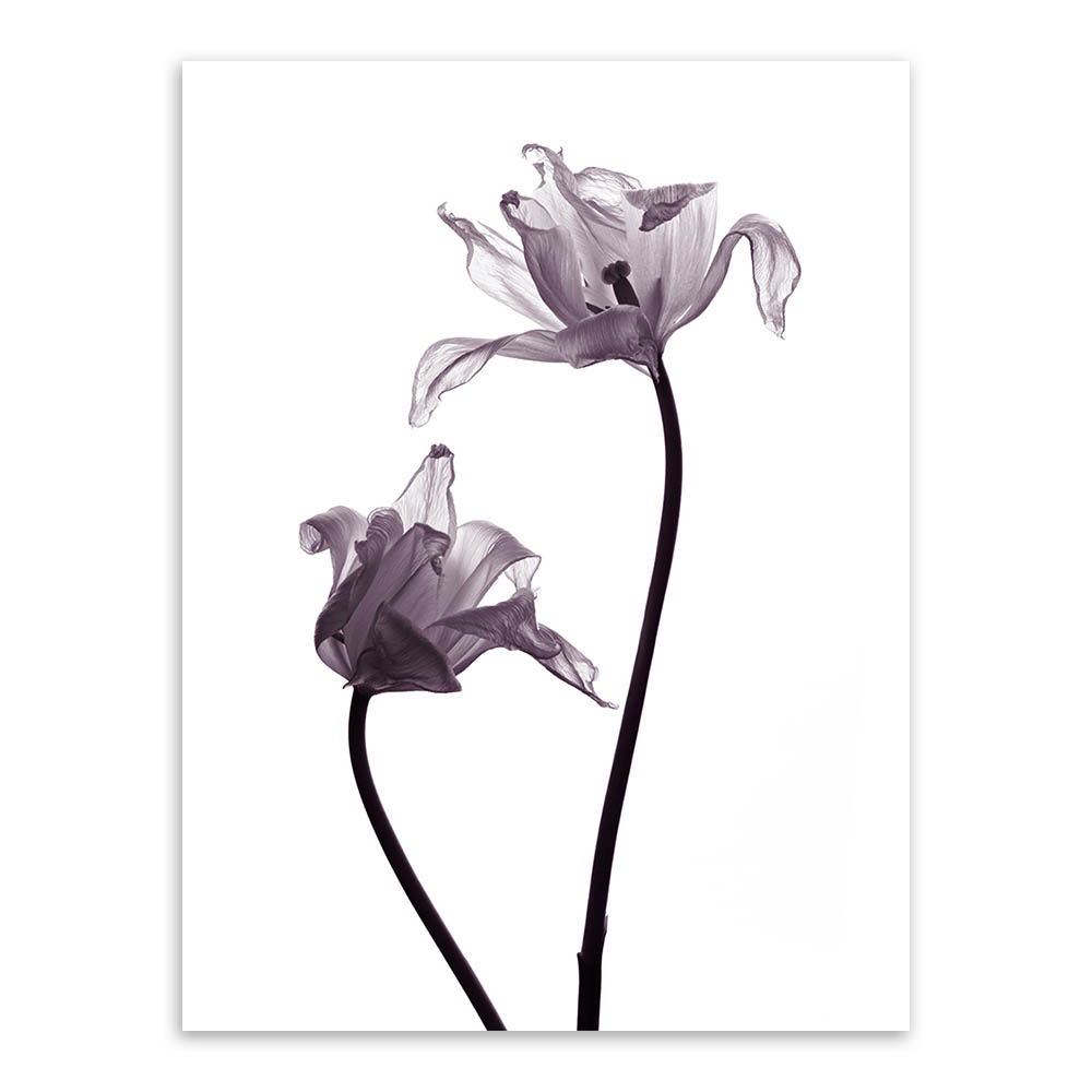 Modern Minimalis Hitam Putih Tanaman Bunga Tulip Foto A4 Besar Art Cetakan Poster Dinding Gambar Kanvas Lukisan Tanpa Bingkai Rumah Deco Art Print Poster Wall Picturesprint Poster Aliexpress