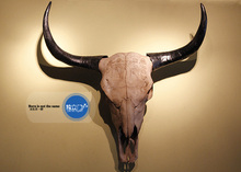 Creative household adornment personality. Resin bionic town house to ward off bad luck. Yak skull hanging wall hanging