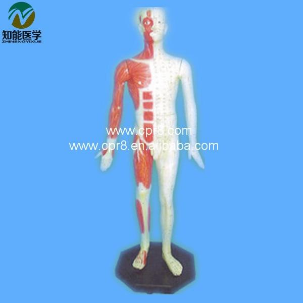 Acupuncture Human Body Model 84CM BIX-Y1004 WBW190 bix y1002 human acupuncture model bronze  178cm wbw332