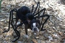 Funniest Spider Decoration Dog Costume