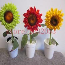 bonsai 40 rainbow mini sunflower ,Ornamental bonsai flower for garden