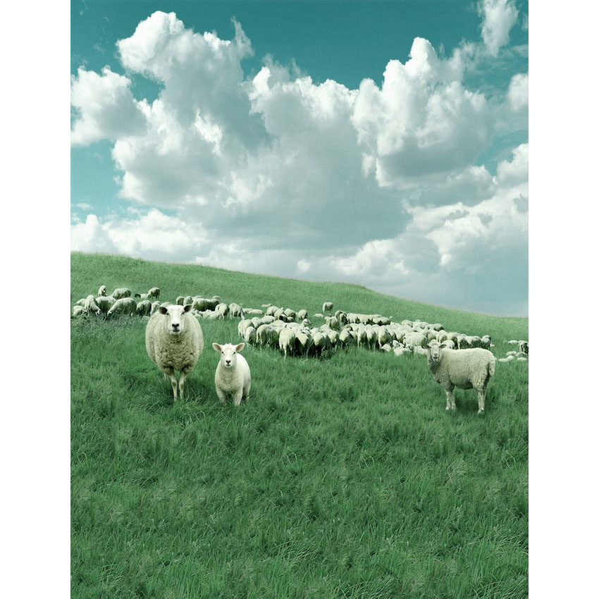 White clouds photography background sheep on prairie photo backdrops for photo studio photographic background fotografia props dark brown brick wall with white clock photography backdrops wedding background 200x300cm photo studio props fotografia
