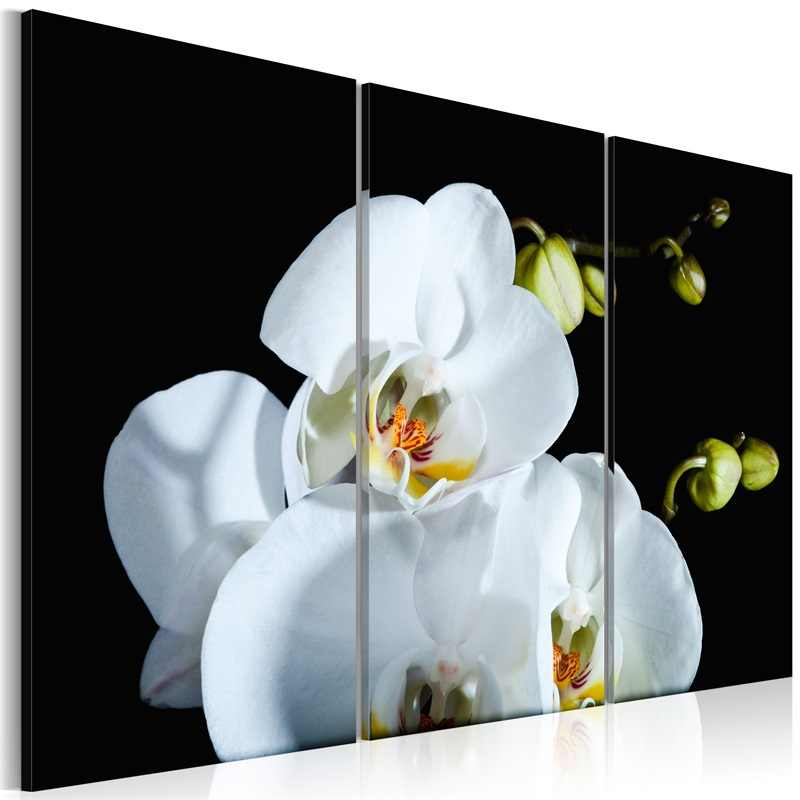3 Pieces/set Classic floral poster Wall Art For Wall Decor Home Decoration Picture Painting PJMT-B (132) Wholesale