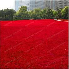 500 Pcs Blue Grass Seed