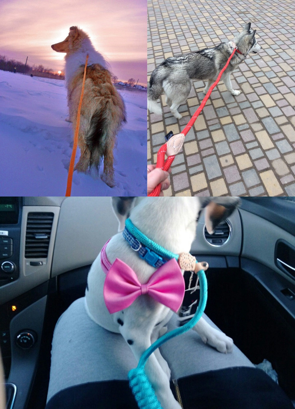 Pet Products Dog Leash Nylon Reflective Puppy Dog Leash Rope Cat Chihuahua Pet Leash And Collar Set Cat Dog Leashes Lead Harness (14)