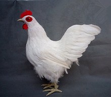 Simulation white Cock polyethylene&furs Cock model funny gift about 40cmx17cmx42cm