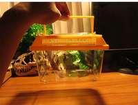 Draagbare Reptiel Voeden Spider Doos Scorpion Larven Vangst Vogel Insect Vervoer Grijpen/beweging Vermogen Ontwikkelen Unisex