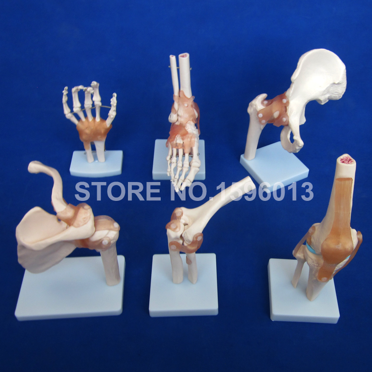 HOT Human Joint Series Model, Human Shoulder,Elbow,Hip,Knee,Hand and Foot Joint Bone Models adjustable knee joint meniscus knee rehabilitation equipment maintenance men and women with a fixed fractures knee ligament reco