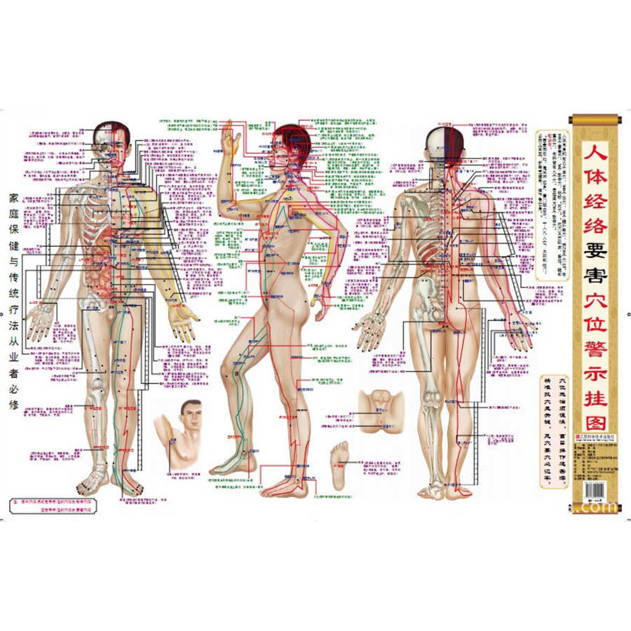 Human's  Dangerous Acupuncture Points Warning Chart for Traditional Chinese Medicine Doctors  Chinese Edition