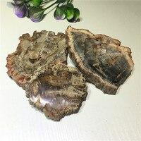 1pcs natural snail slice / chrysanthemum petrified stone specimen for home decor