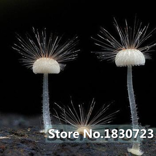 Luminous Edible Mushroom Seeds (500 Pieces)