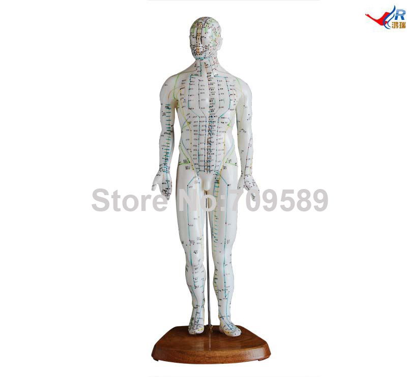 Acupuncture Model 46CM Male, Acupuncture Model 22cm head acupuncture point model head acupuncture four function model acupuncture model