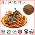 400g Top grad Cordyceps/Aweto/worm grama/cordyceps sinensis/Chinês lagarta fungo Extrato Extrato
