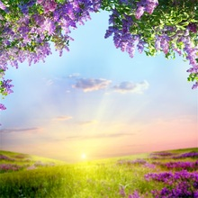 Laeacco Spring Flowers Field Sunset Grassland Scenic Photography Backgrounds Customized Photographic Backdrops For Photo Studio