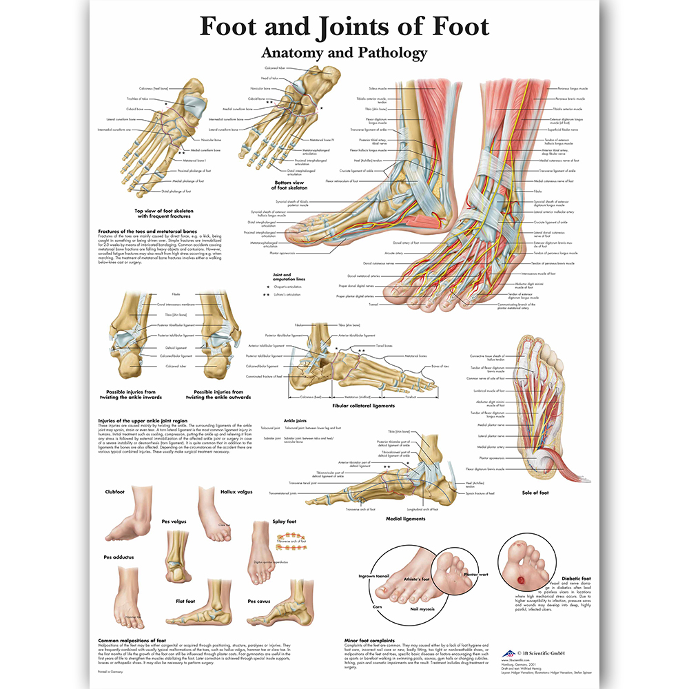 foot joints of foot chart anatomy pathology poster canvas painting wall pictures for medical education doctors office classroom [ 1000 x 1000 Pixel ]