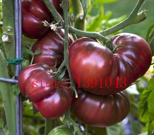 "200pcs/bag Rare tomato seeds + HEIRLOOM VEGETABLE SEEDS -""RUSSIAN BLACK KRIM"" Nutritious vegetable NON-GMO DIY Home Garden Plant"