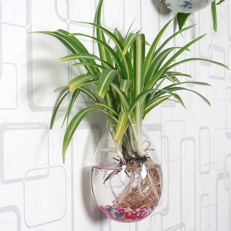 Oselif 1pcs Handmade The Newest Wall Glass Vase Clear Egg Shape