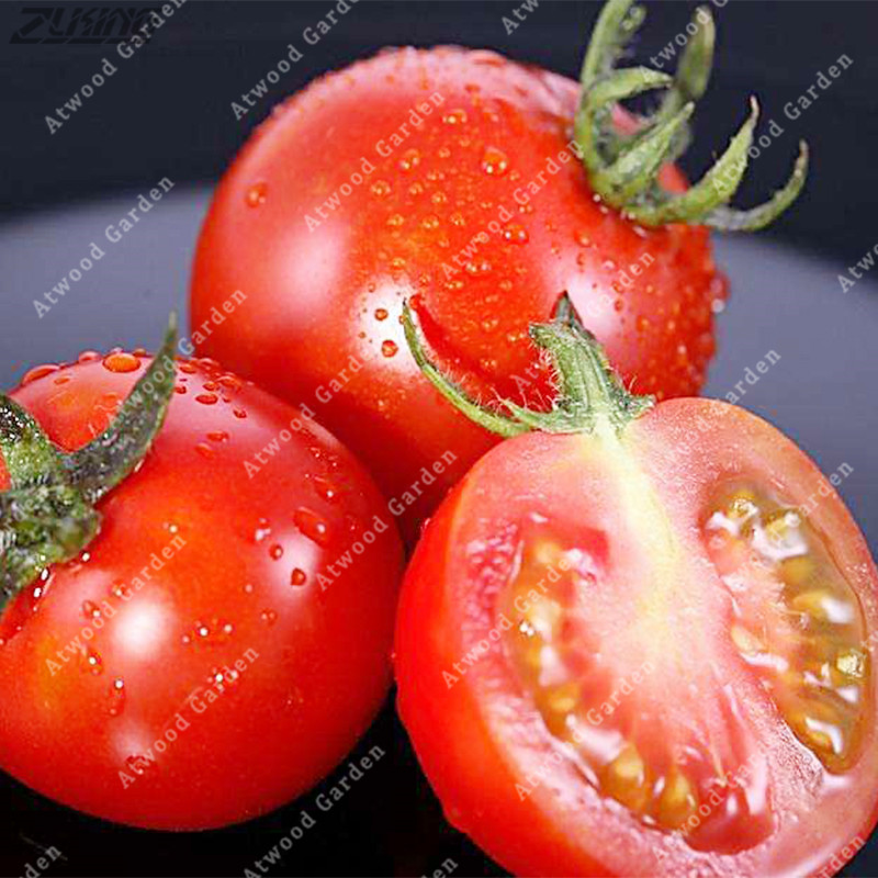 Bonsai Zlking Tomato Fresh Red big Beef Fruit 100 Grams Professional Pack Organic Crack Resistant Indeterminate High Quality And Inexpensive
