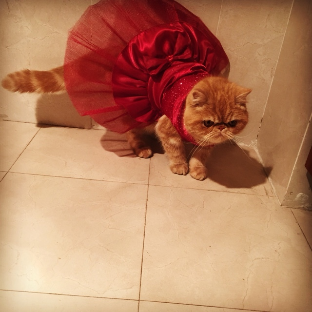 Cats Clothing New Arrivals Cat Wedding Tutu Dress For Pet  My Pet World Store