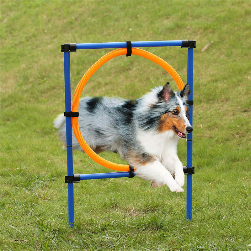 Rugby Dog Agility Show