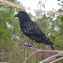 cute black simulation crow toy plastic & furs new model doll gift about 25cm