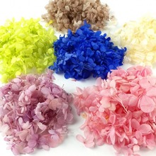 5g/lot High Quality Natural Fresh Preserved Flowers Dried Hydrangea Flower Head For DIY Real Eternal Life Material